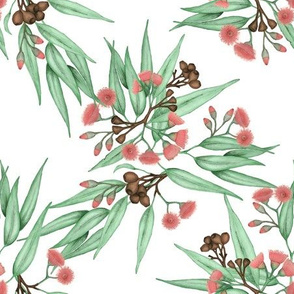 Gumnuts and Flowering Gum Leaves, GL1A