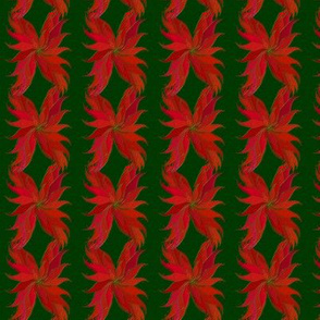 poinsettias-4-inch