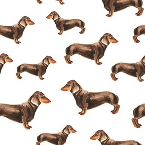 Dachshounds on white background