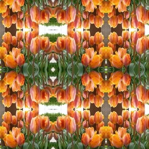 Spring tulips in Orange