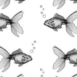 Goldfish on White