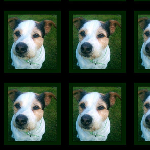 Jess the Jackrussell Dog