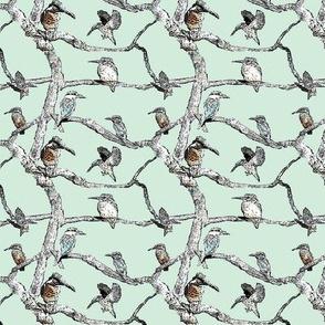 kingfisher mint