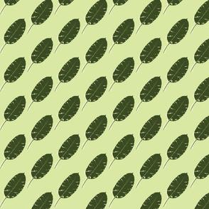 Umbrella Tree Leaf