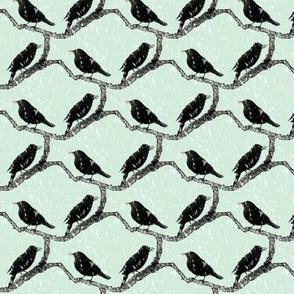 blackbirds in snow