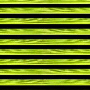 moray eel stripe