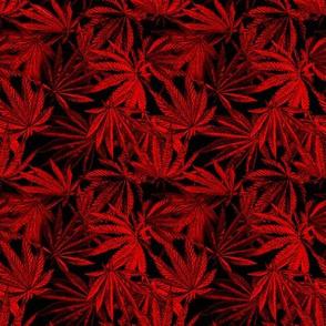 420 RED Bordello 2