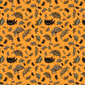 orange-tortoise