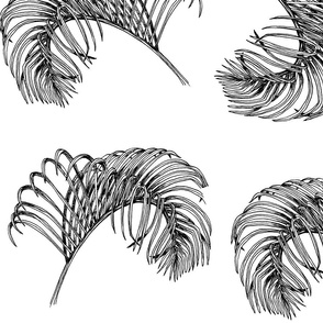 Palm Frond Sketch