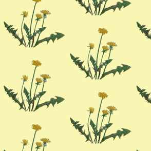 dandelion_more_cleaned_and_pale__offset