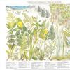 Cw_large_botanical_01