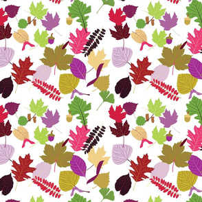 Field Guide to Leaves