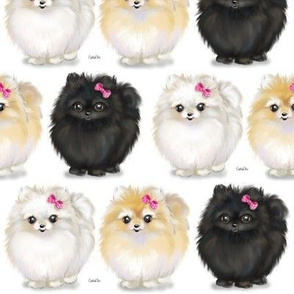 Pomeranians white