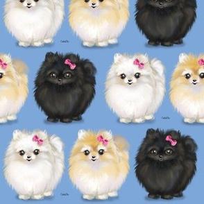 Pomeranians Blue
