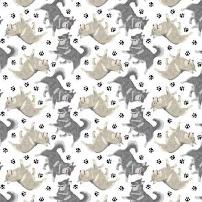 Trotting Swedish Vallhund and paw prints - white