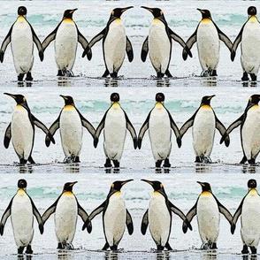 Penguins Toe the Line