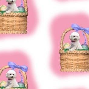 bichon in a basket