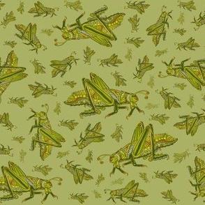 Grasshopper_MC_NEW_18_x_21_flt_GRN