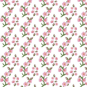 Rock rose flower_garden