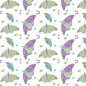 Butterflies and Swirls