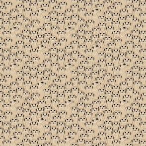 Meerkats - Suricata: Mocha 50%