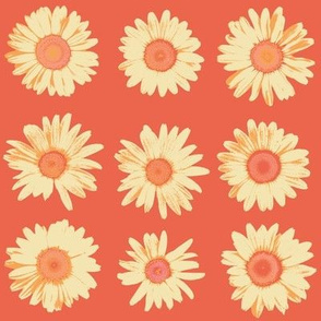 crazy daisy on vermilion