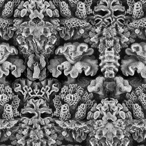 Haeckel Aquatica ~ Coral
