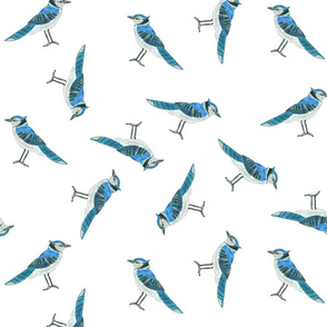 Chickie's Blue Jays