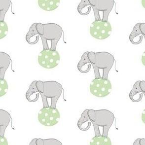Circus Elephant