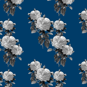 Redoute' Rose ~ Black and White on Lonely Angel Blue