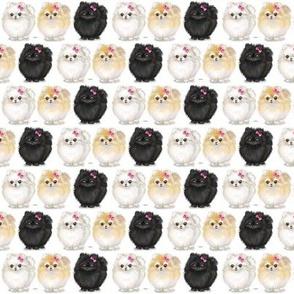 Pomeranians white Small Print