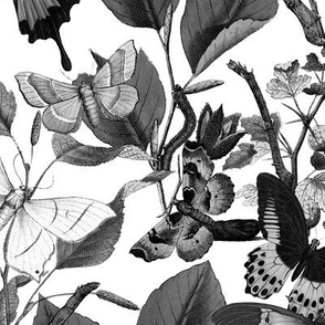 Butterfly Sanctuary ~ Black and White