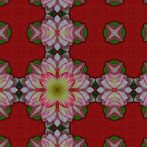 Dahlia Kaleidoscope 02