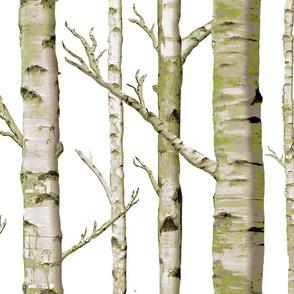 Birch Grove in Moss