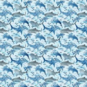 Swimming with Sharks xxs (gray) - © Lucinda...