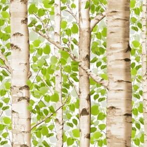 Birch Grove in Spring