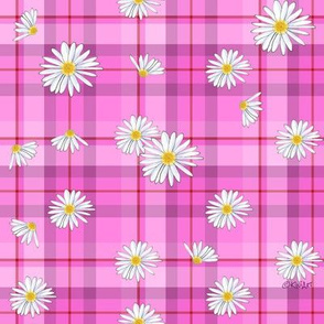 Pink Red Daisy Craze