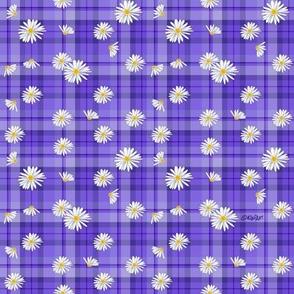 Purple Daisy Craze (SMALL)