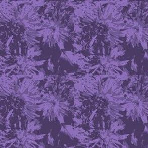 tone-on-tone_purple_asters_9_24_07_005-ch-ed