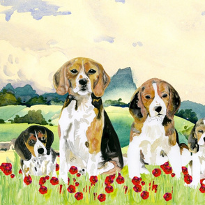 Beagle bliss