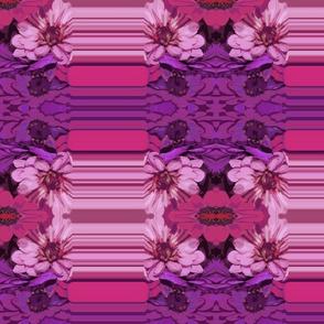 Aunt Sophie's Zinnias purple stripe