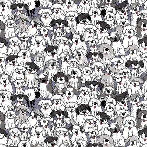 Sheepdogs On Watch