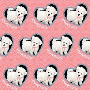Bichon Frise bolognese puppy dog