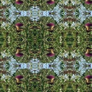 Butterfly_bush