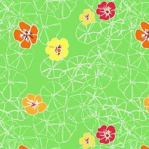 Field of Nasturtiums
