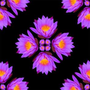 Purple Lily Flowers - Large on Black