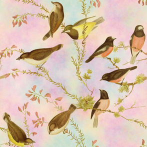 Birds of Australia ~ Robins and Gerygones ~ Opalescent Sky