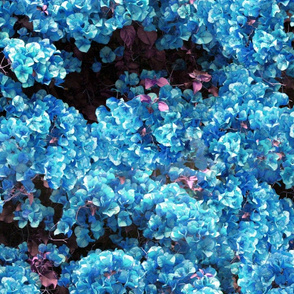 Flowers Out Of Bed ~ Hydrangea