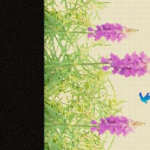 Lavender_Rainbow_3-1 (yard)
