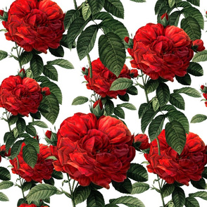 Redoute' Roses ~ Riot of Red ~ Medium